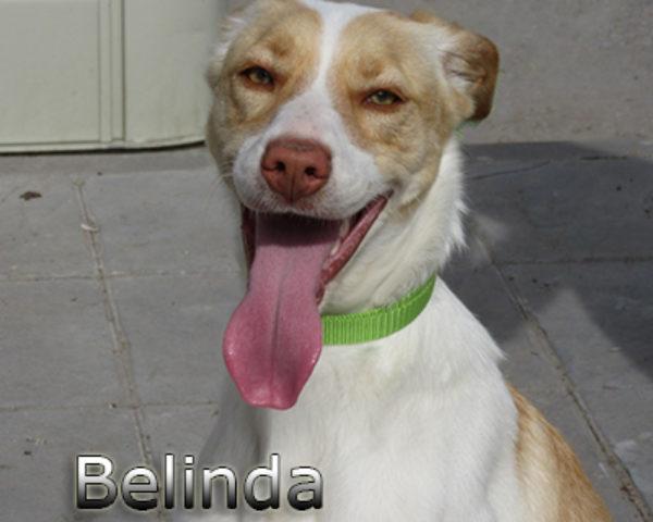 Belinda-(5)web