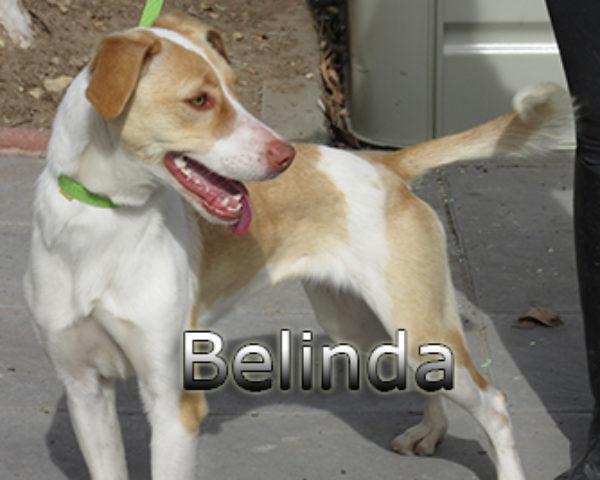 Belinda-(6)web
