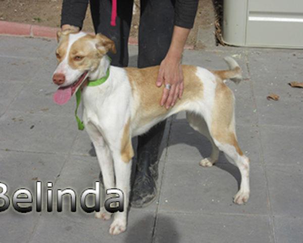 Belinda-(7)web