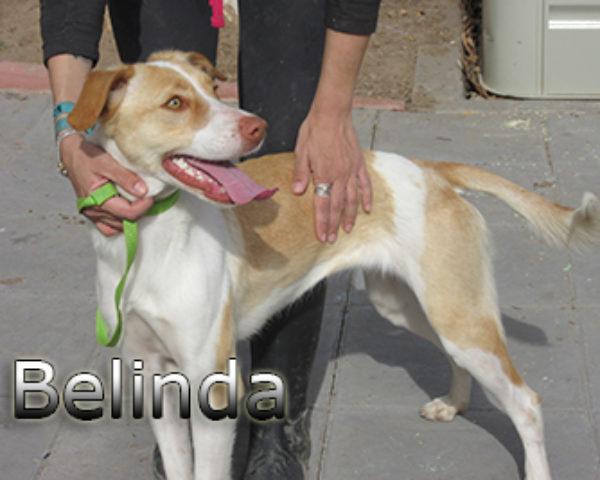 Belinda-(8)web