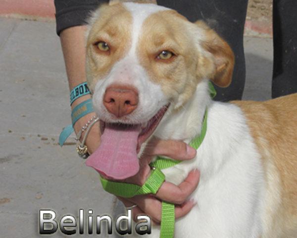 Belinda(web)