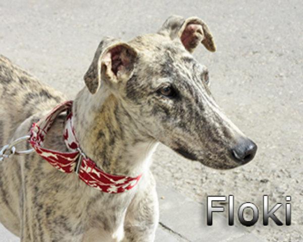 Floki-(3)web