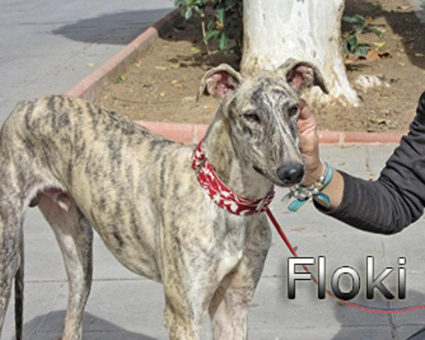 Floki-(8)web
