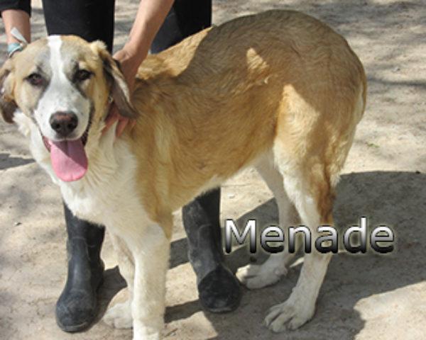 Menade-(6)web