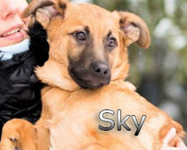 Sky-(10)web