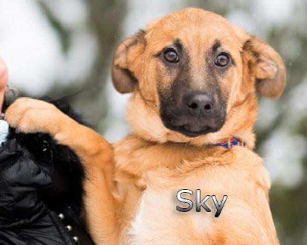 Sky-(1)web