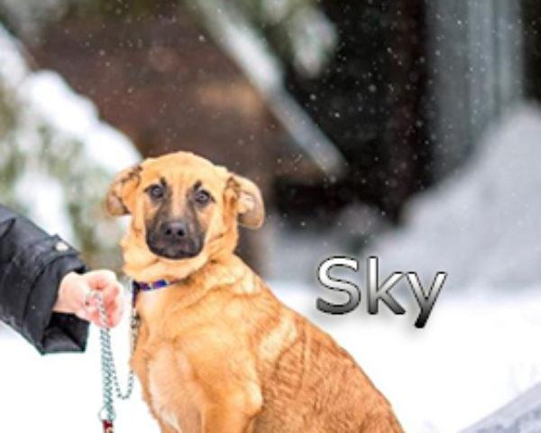 Sky-(4)web