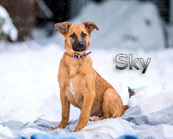 Sky-(7)web