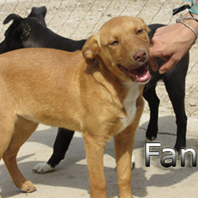 Fanta-(1)web