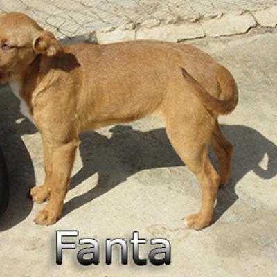 Fanta-(2)web