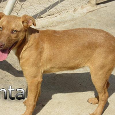 Fanta-(3)web