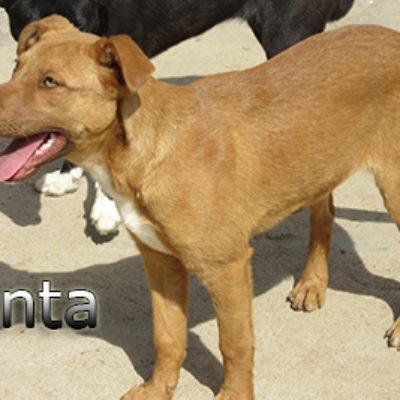 Fanta-(4)web