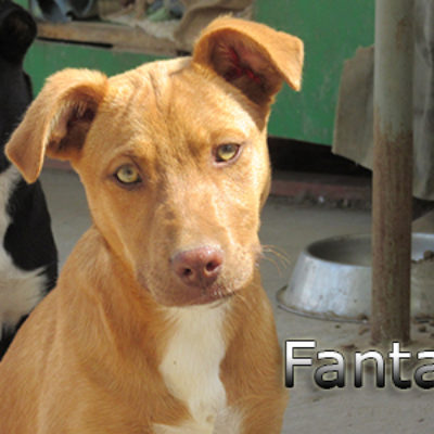 Fanta-(5)web