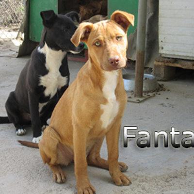 Fanta-(6)web