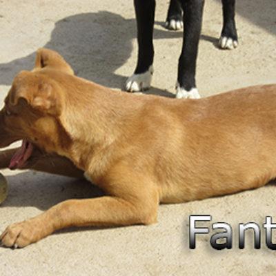 Fanta-(7)web