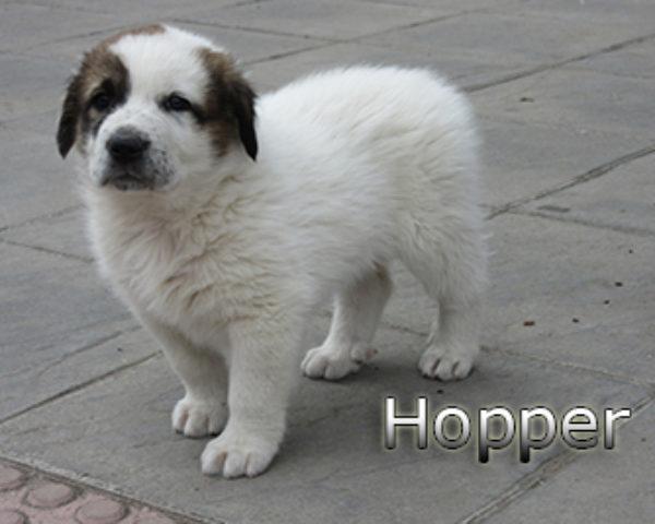 Hopper-(1)web