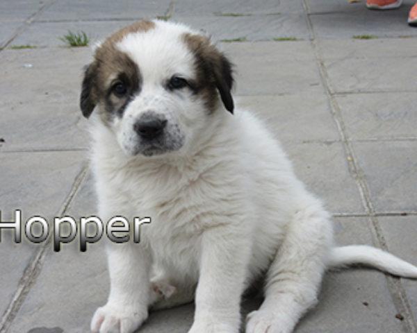 Hopper-(9)web