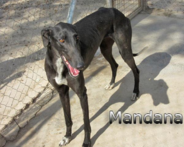 Mandana-(8)web
