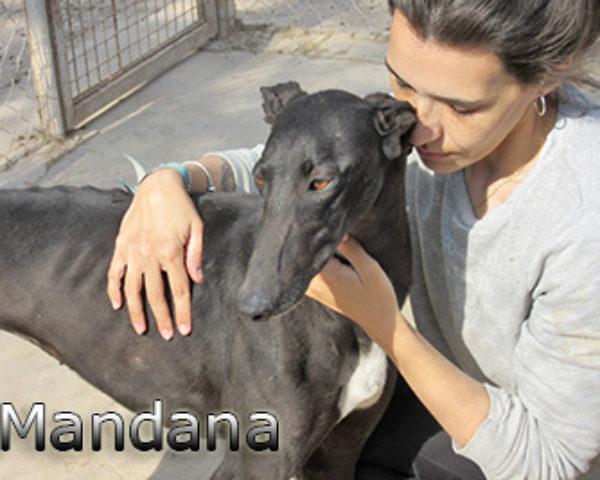 Mandana-(9)web
