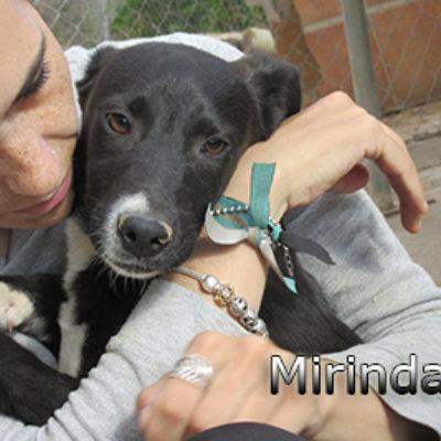 Mirinda-(1)web
