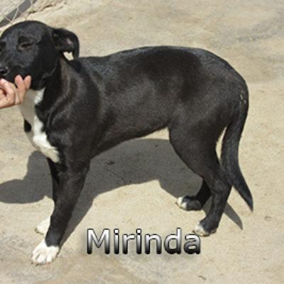 Mirinda-(2)web