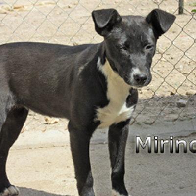 Mirinda-(7)web