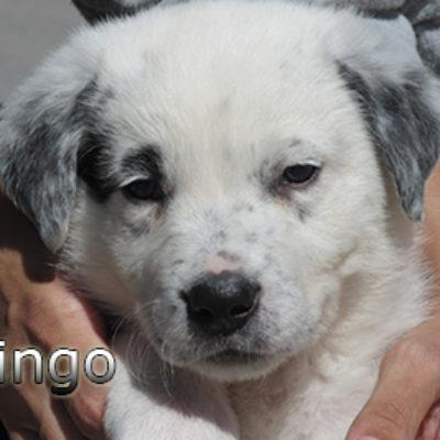 Pingo-(1)web