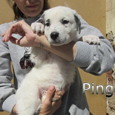 Pingo-(3)web