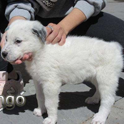 Pingo-(5)web