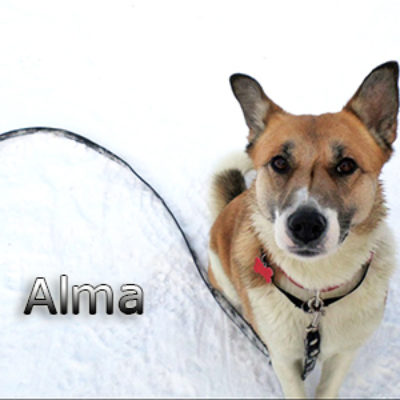 Alma-(13)web