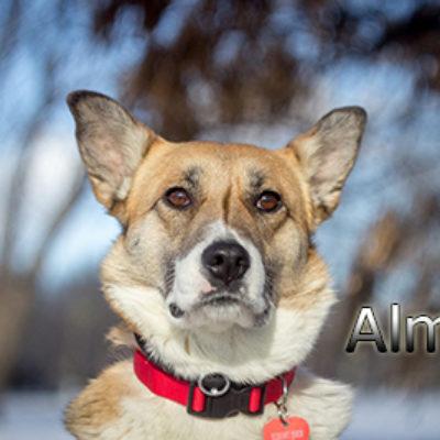 Alma-(15)web