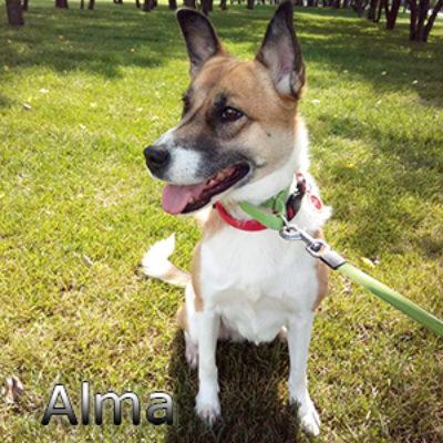 Alma_072019-(1)web