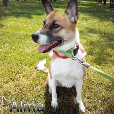 Alma_072019-(2)web