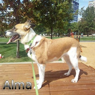 Alma_082019-(1)web