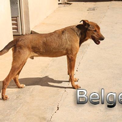 Belge-(3)web