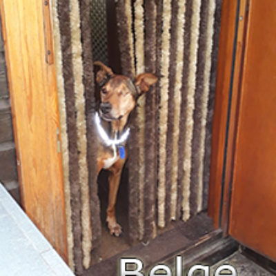 Belge_Update_18102019-(1)web