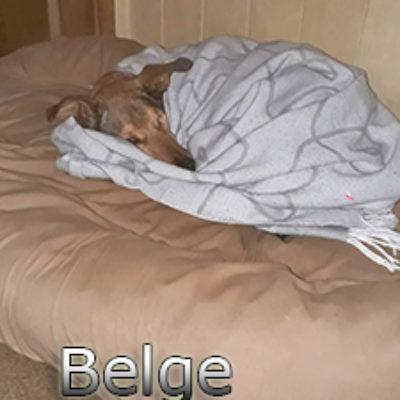 Belge_Update_18102019-(2)web