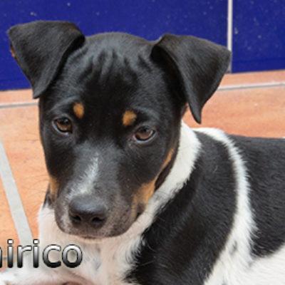 Chirico-(10)web