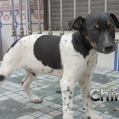 Chirico-(5)web