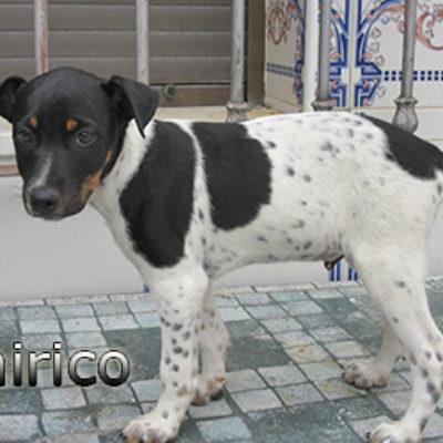 Chirico-(6)web