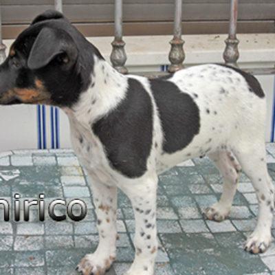 Chirico-(7)web