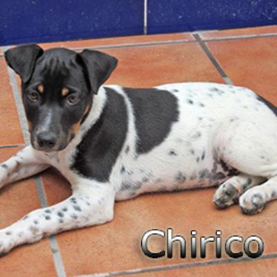 Chirico-(8)web