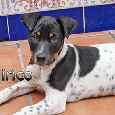 Chirico-(9)web