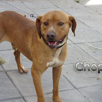 Chopo-(4)web
