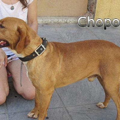 Chopo-(5)web