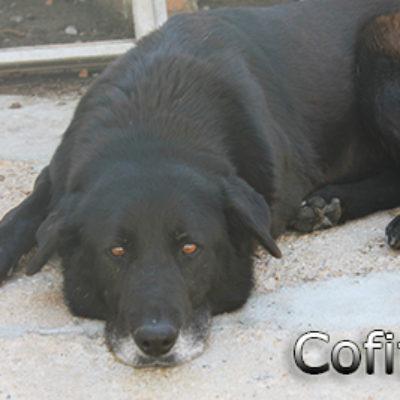 Cofita-(1)web