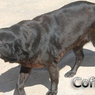 Cofita-(5)web