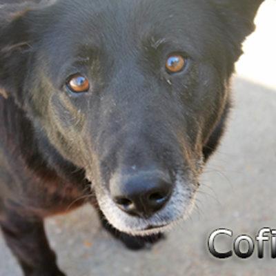 Cofita-(6)web