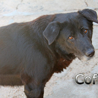 Cofita-(8)web