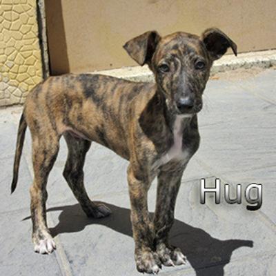 Hug-(2)web